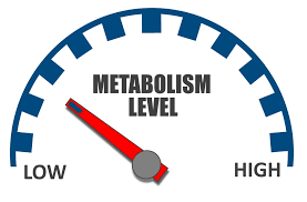 Brainhacking Weight Loss and Your Metabolism